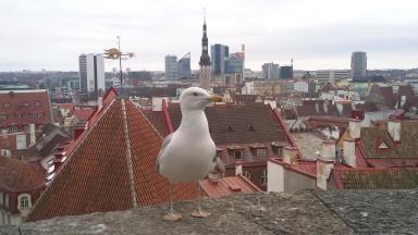 Mart 2016, Tallinn