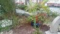 """Winter Garden""-in daxili"